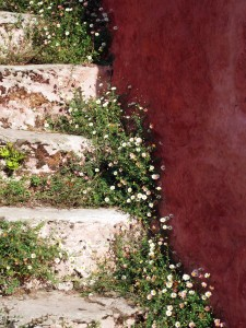Steps at the Ballymaloe student cottages